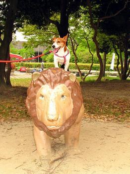 ライオンさん.jpg