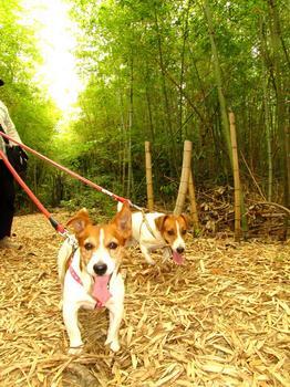 竹林でやんす.jpg